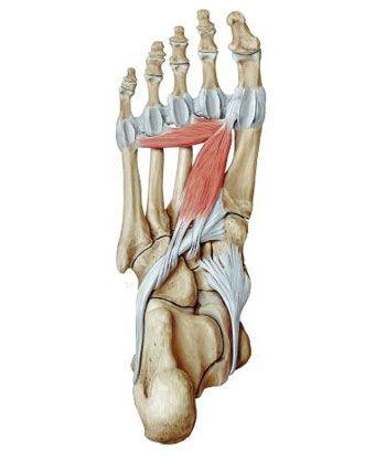 лигаментит стопы лечение