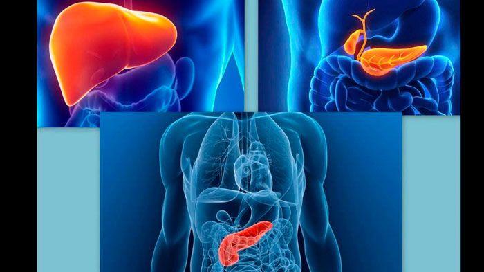 УЗИ брюшной полости какие органы