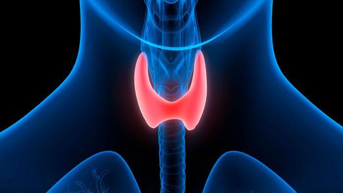 узи щитовидной железы что показывает
